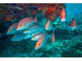 Great Barrier Reef Education Experience Program opens