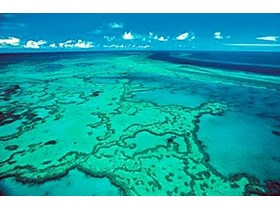 Farmers turn reef action into income