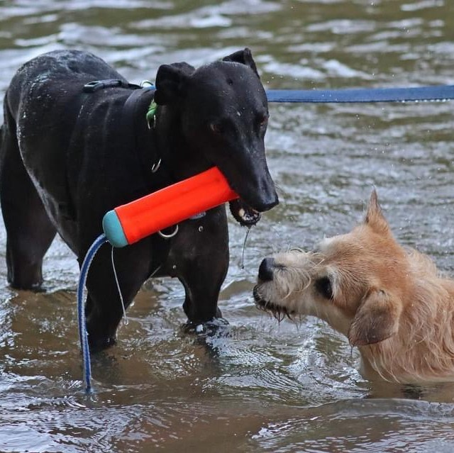 Rebel likes to swim with her friends
