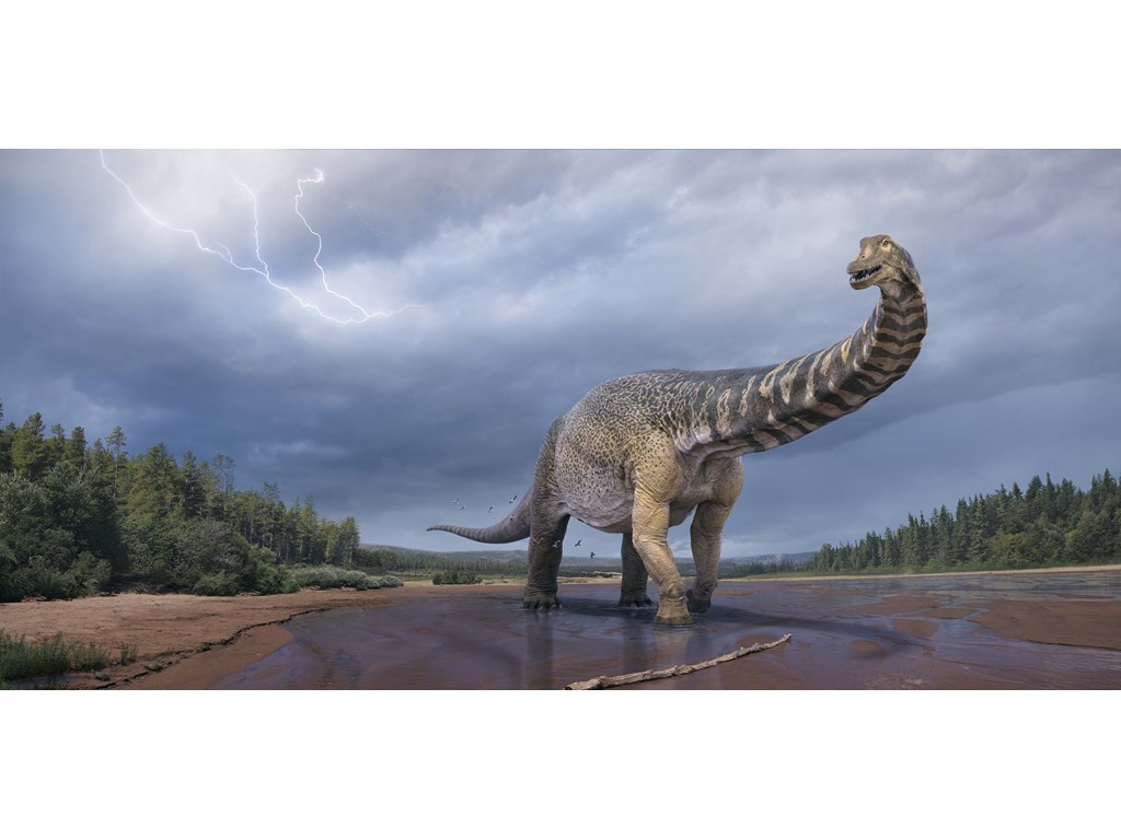 Queensland dinosaur recognised by scientists as largest in Australia