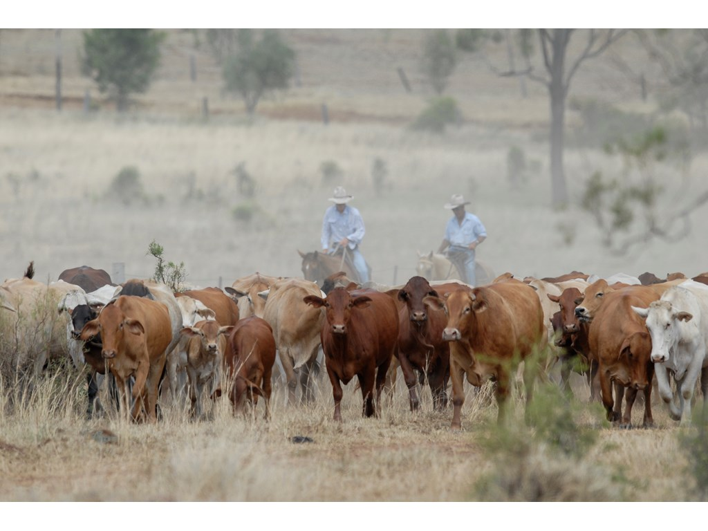 Have your say on the future of Queensland's stock routes